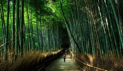 Japan's Circular Economy: Lessons for the EU