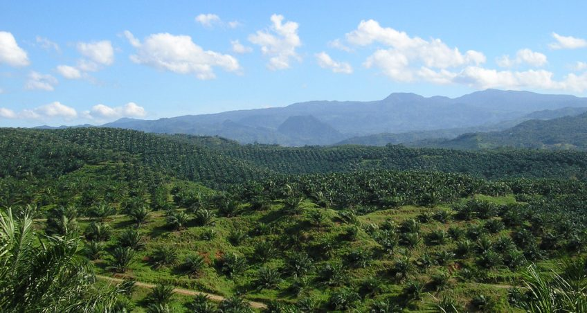 EU-Indonesia FTA Relations: Palm Oil – In for a Rough Ride?