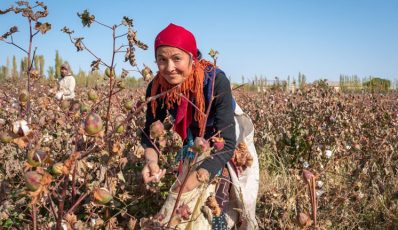 How Uzbekistan is eradicating child and forced labour in the cotton harvest